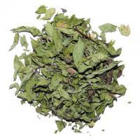 Minze Marokko 10g Mentha Spicata
