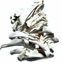 Weisser Salbei Blätter geschnitten 25 g