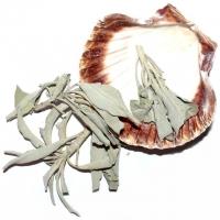 Räucherset Jakobsmuschel mit weissem Salbei