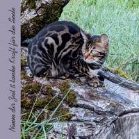 Karte  Nimm dir Zeit - Spruchkarte (Katze)