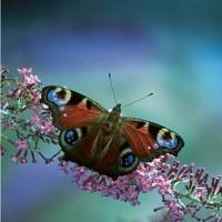 Magischer Schmetterling - Doppelkarte mit Couvert