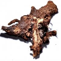 Osha Root 20g Ligusticum Porteri