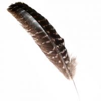Räucherfeder Truthahn Schwung 30-38 cm
