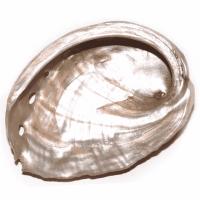 Abalone Muschel rot ca. 6-7 cm
