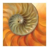 Muschelspirale - Postkarte 14 cm mit Couvert